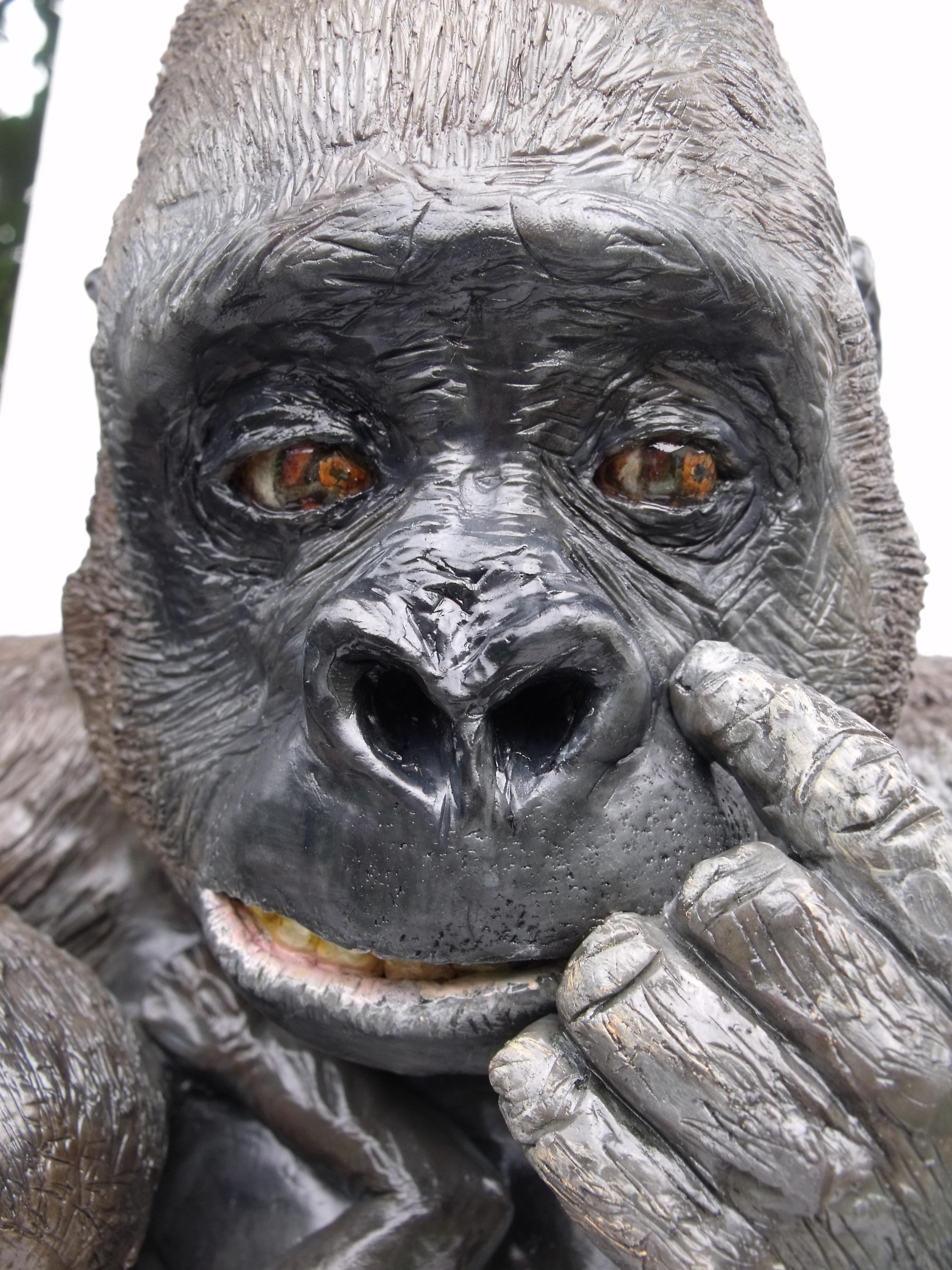 White chocolate Western Lowland Gorilla